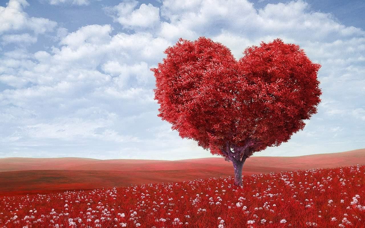 Valentine's Day S...